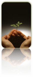 Un corse e la formazione per motori di ricerca - il seme del know how di domani