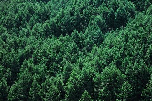 La foresta - simile all'ecosistema in cui si alimenta e cresce il tuo blog ...