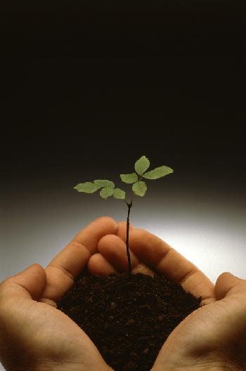 I blogs sono come una piccola pianta ...