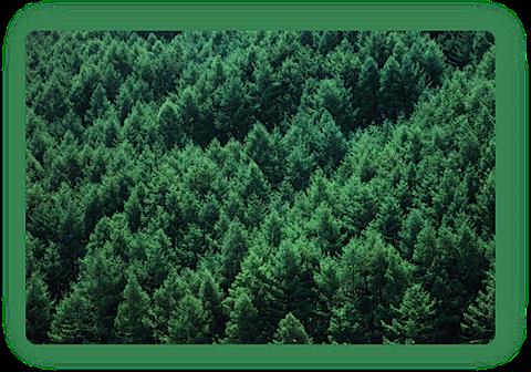 foresta-blog.png